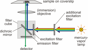 Introduction: Fluorescence Microscopy - Soft Matter Physics Division