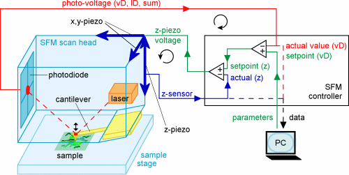 microscope scanning thesis tunneling We study electroluminescence from molecules confined in a scanning tunneling microscope based on a  the thesis is devoted to theoretical investigations.