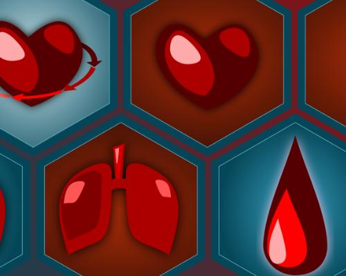 Kreislauf und Blut – Wie funktioniert der menschliche Körper? – Workshop 18.07.2018